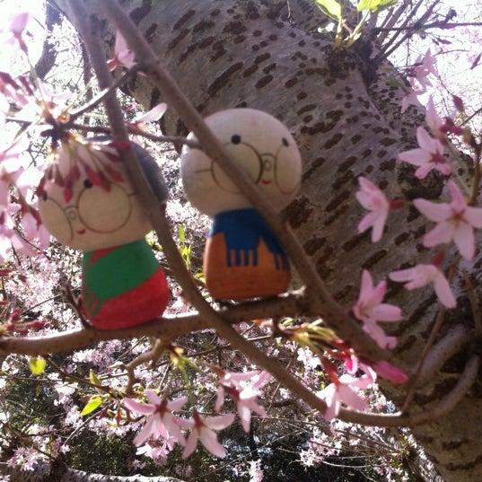 3/24/2012 tarihinde Ariz Danger G.ziyaretçi tarafından Descanso Gardens'de çekilen fotoğraf