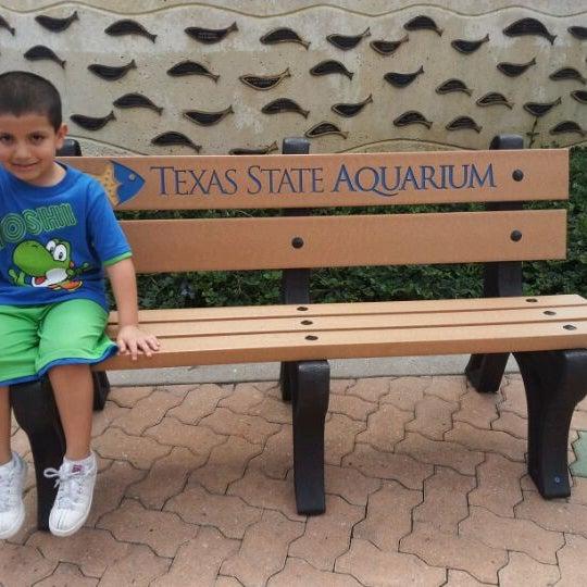 3/13/2012 tarihinde Rachel N.ziyaretçi tarafından Texas State Aquarium'de çekilen fotoğraf