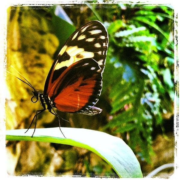 Foto scattata a Houston Museum of Natural Science da Martin L V. il 7/18/2012