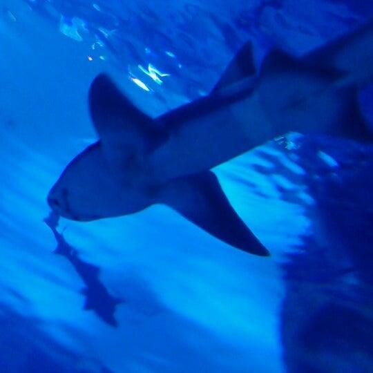 Das Foto wurde bei Antalya Aquarium von ahmet l. am 8/20/2012 aufgenommen