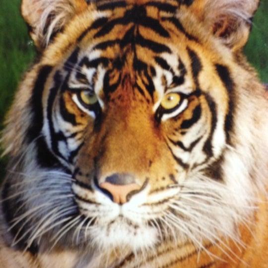 Снимок сделан в Phoenix Zoo пользователем Ben V. 3/13/2012
