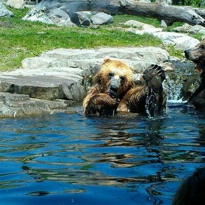 5/14/2012 tarihinde Ben K.ziyaretçi tarafından Minnesota Zoo'de çekilen fotoğraf
