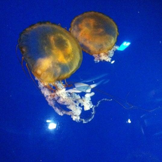 Das Foto wurde bei Aquarium of the Pacific von Dennis L. am 5/19/2012 aufgenommen