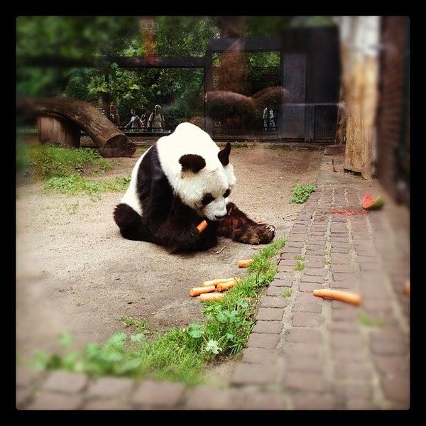 7/6/2012에 Sasha L.님이 Zoologischer Garten Berlin에서 찍은 사진