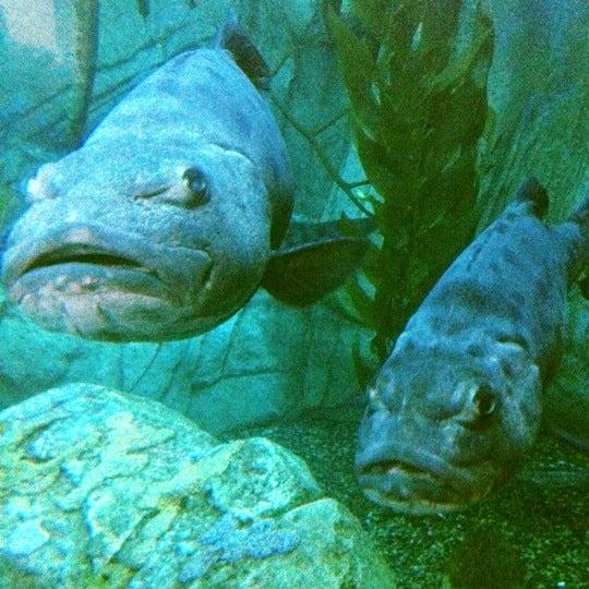 Photo prise au Aquarium of the Pacific par Sharon le7/20/2012