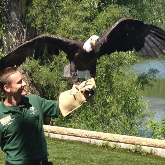 7/9/2012 tarihinde Arni T.ziyaretçi tarafından Minnesota Zoo'de çekilen fotoğraf