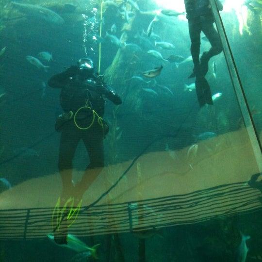 Das Foto wurde bei Aquarium of the Pacific von Miss M am 6/29/2012 aufgenommen