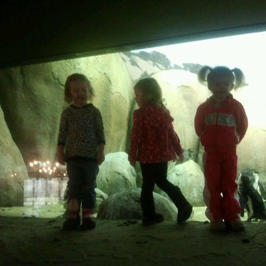 3/5/2012 tarihinde Jessica O.ziyaretçi tarafından Minnesota Zoo'de çekilen fotoğraf