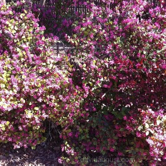 2/16/2012 tarihinde David A.ziyaretçi tarafından Descanso Gardens'de çekilen fotoğraf