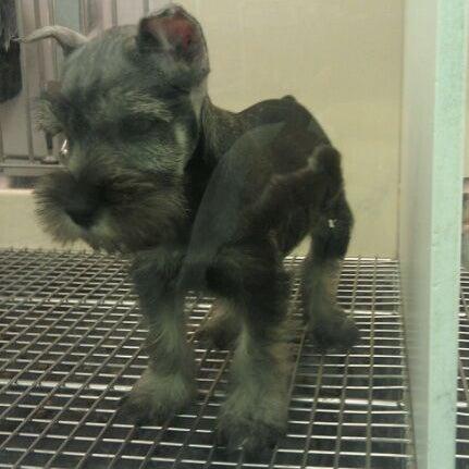 Photos at Petland - Pet Store in Pensacola