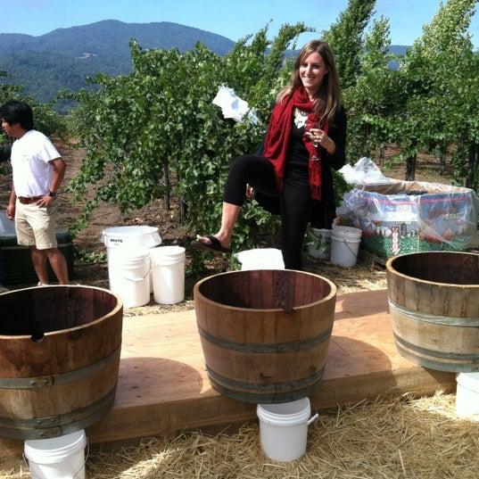 Foto scattata a Peju Province Winery da barbara s. il 8/25/2012