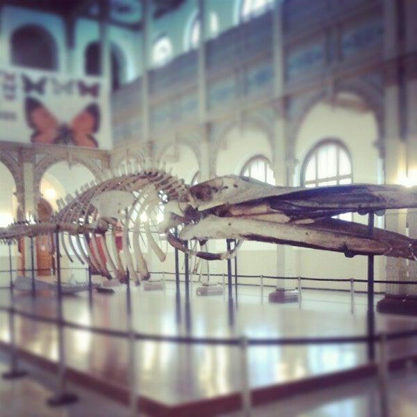 8/14/2012にNickolas Ariel N.がMuseo Nacional de Historia Naturalで撮った写真