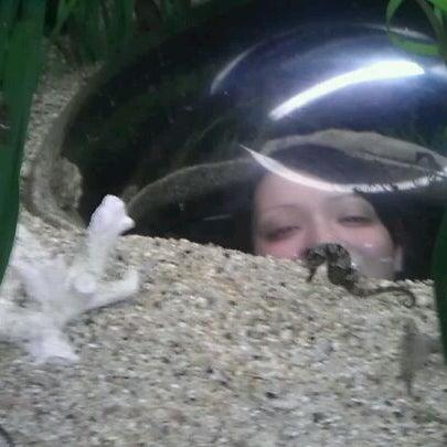 5/7/2012 tarihinde Sara S.ziyaretçi tarafından Texas State Aquarium'de çekilen fotoğraf