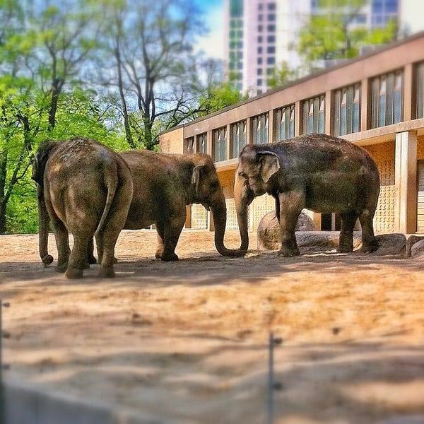 4/30/2012에 Dirk님이 Zoologischer Garten Berlin에서 찍은 사진
