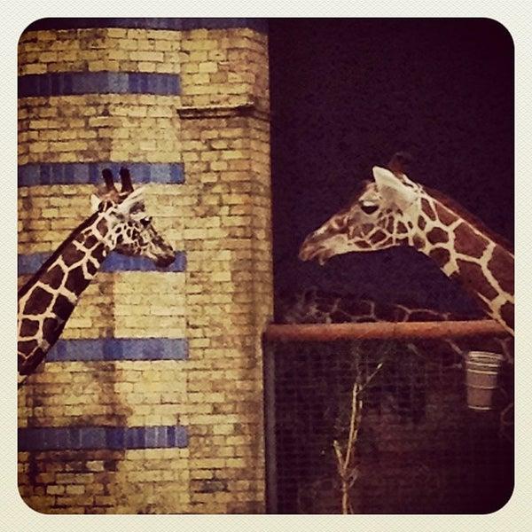 8/10/2012에 Christian B.님이 Zoologischer Garten Berlin에서 찍은 사진
