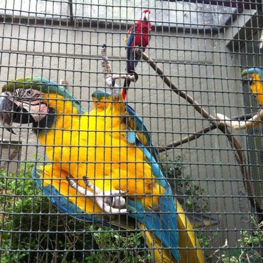 4/4/2012 tarihinde Ankit M.ziyaretçi tarafından Auckland Zoo'de çekilen fotoğraf
