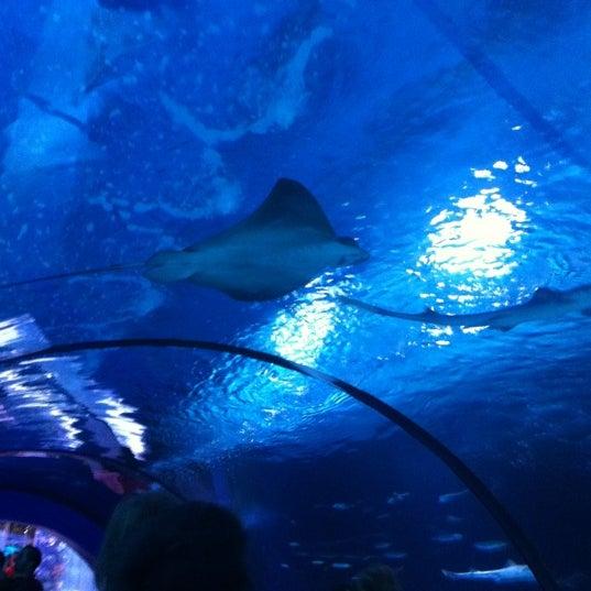 9/2/2012 tarihinde Handeziyaretçi tarafından Antalya Aquarium'de çekilen fotoğraf