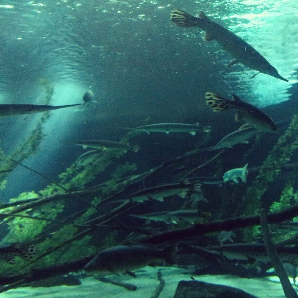 Foto diambil di SEA LIFE Minnesota Aquarium oleh Tina W. pada 8/12/2012