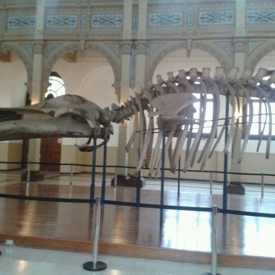 8/14/2012にPamela B.がMuseo Nacional de Historia Naturalで撮った写真