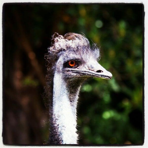 4/26/2012 tarihinde Robin W.ziyaretçi tarafından Auckland Zoo'de çekilen fotoğraf