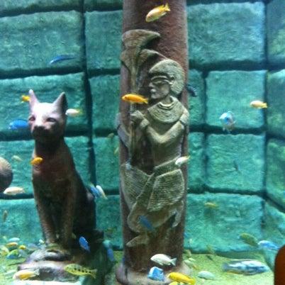 Das Foto wurde bei Antalya Aquarium von Eray U. am 8/21/2012 aufgenommen