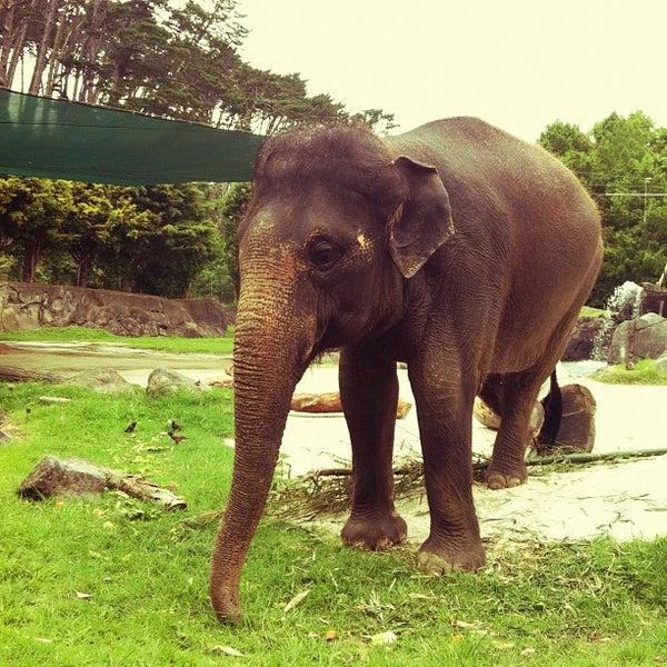 5/27/2012 tarihinde Michelle M.ziyaretçi tarafından Auckland Zoo'de çekilen fotoğraf