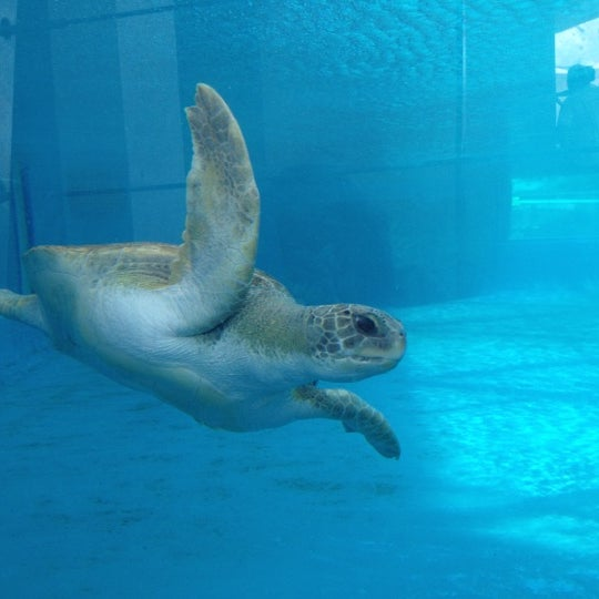 6/19/2012 tarihinde Amy B.ziyaretçi tarafından Texas State Aquarium'de çekilen fotoğraf