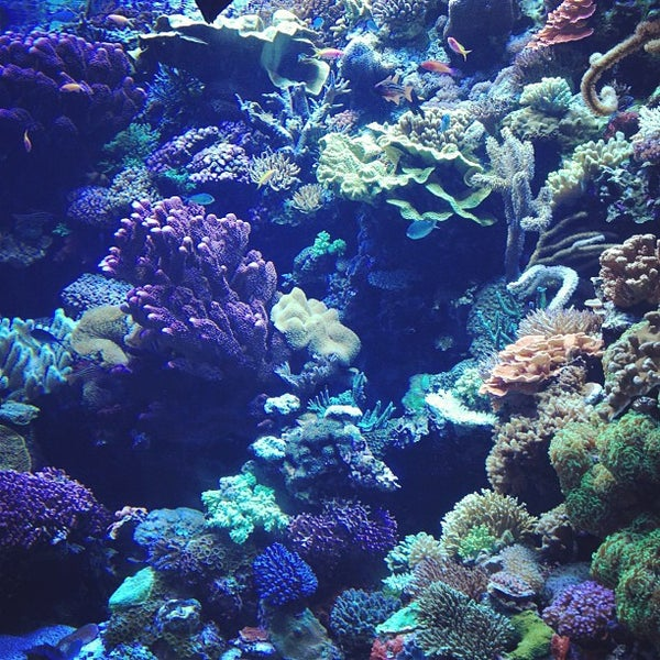 Das Foto wurde bei Aquarium of the Pacific von Jason Y. am 8/19/2012 aufgenommen