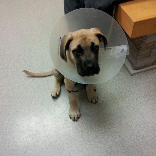 Photos at Long Island Veterinary Specialists - 9 tips from
