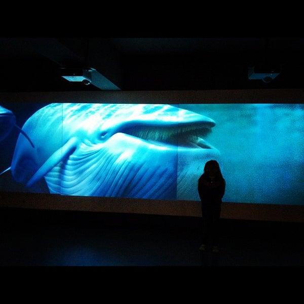 8/4/2012にFelipe U.がMuseo Nacional de Historia Naturalで撮った写真