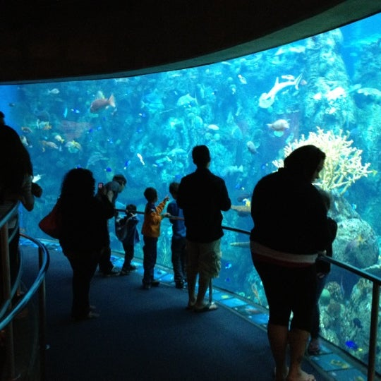 Foto tomada en Aquarium of the Pacific  por Neil E. el 3/25/2012