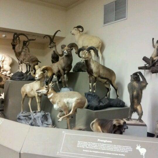 Foto tirada no(a) Las Vegas Natural History Museum por Vanessa F. em 3/20/2012