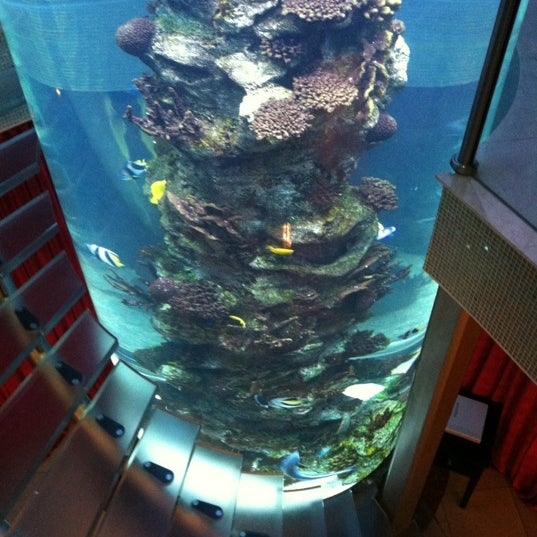 Phenomenal atmosphere and cool as hell aquarium stairwell... Great date spot!