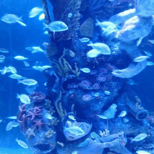 Das Foto wurde bei Antalya Aquarium von Faiz F. am 9/2/2012 aufgenommen