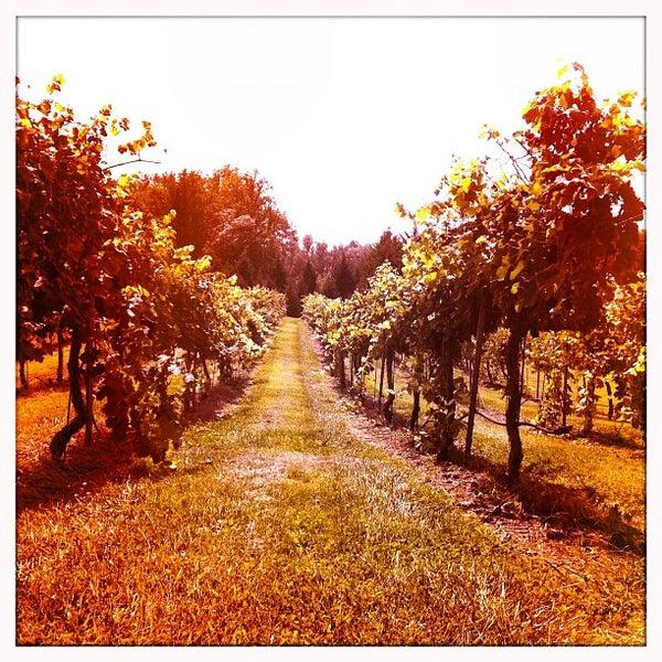 8/31/2012 tarihinde DizzyTaco™ziyaretçi tarafından Keswick Vineyards'de çekilen fotoğraf
