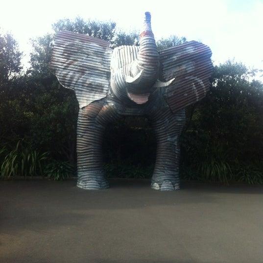 6/4/2012 tarihinde Debra M.ziyaretçi tarafından Auckland Zoo'de çekilen fotoğraf