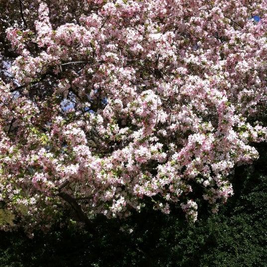 Foto scattata a Conservatory Garden da Rey R. il 4/5/2012