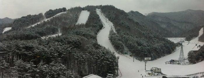 Yong Pyong Resort Ski Area is one of South Korea 🇰🇷.