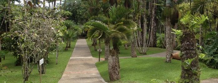 Jardin de Balata is one of Rivières, étangs, cours d'eau de Martinique.