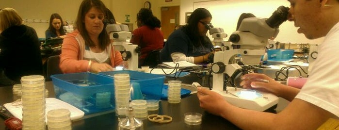 Biological Sciences is one of CSUSB.