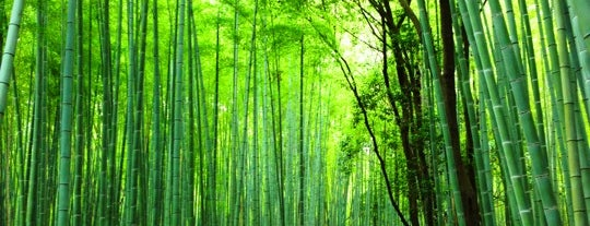 Arashiyama Bamboo Grove is one of Japan Musts.