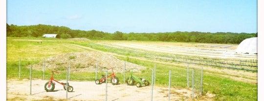 Manfredi Farms is one of Lugares guardados de Karl.