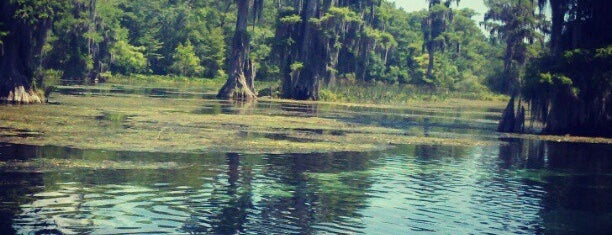 Wakulla Springs State Park is one of Locais salvos de Colleen.