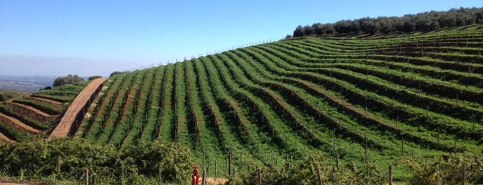 Tokara Winery is one of South Africa.