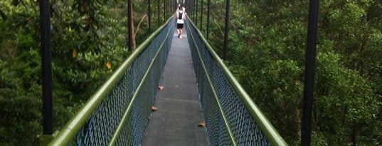 HSBC TreeTop Walk is one of Trek Across Singapore.