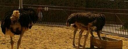 Парк экзотических животных is one of Olga T. : понравившиеся места.
