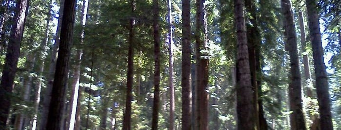 Sequoia Park is one of West Coast Road Trip.