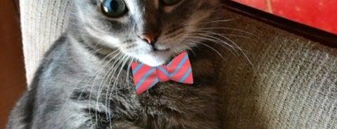 Мой домик)) is one of Favorite Cats.