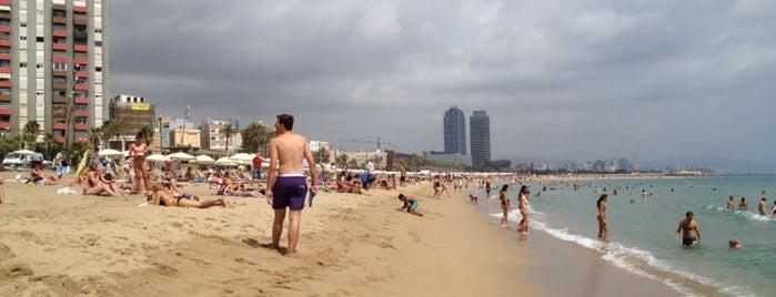 Platja de Sant Miquel is one of Barcelona City Guide.