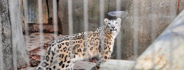 Memphis Zoo is one of I  2 TRAVEL!! The ATLANTIC COAST✈.
